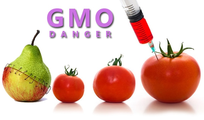 There is an enormous amount of controversy around GMOs and a huge uproar from the public to label them and stop GMO production. In this paper we will dissect GMOs to discuss what they are, who is behind them and why they are bad for our health.